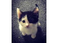 *Adopted *Kittens 1 boy lovely little kitten