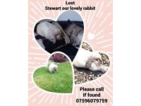 Lost Stewart our lovely rabbit