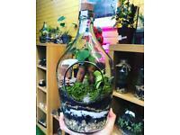 Bottle shaped terrarium with ficus ginseng bonsai tree