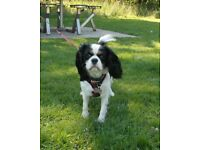 Barks in the Park - small dog walking and petsitting services