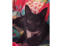 7 month old kitten- free
