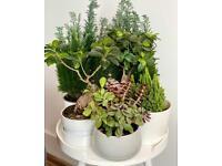 Great indoor plants bundle (8 pieces)