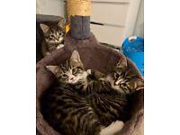 Happy Kittens Ready in 2 Weeks!