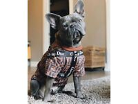 Dog clothes | Pet Equipment & Accessories for Sale - Gumtree