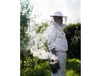 Honeybee swarms collected free Stratford-upon-Avon area