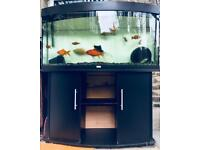 JUWEL VISION 450 TANK + CABINET COMBO ( fish not included)