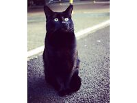 Missing Black Cat in Colliers Wood