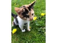 Beautiful Kittens ❤️🐱🐱❤️