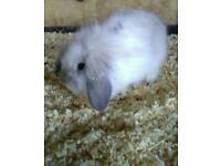 Beautiful baby bunnies