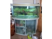 Massive bow fronted aquarium/tank, with everything for a tropical setup except fish and water!!!