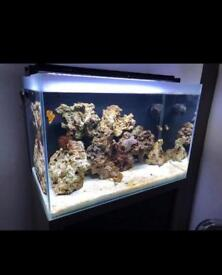 Marine fish tank and cabinet