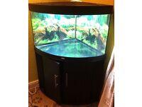 Corner Fish tank (black cabinet)