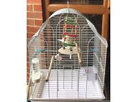 Single budgie and accessories for sale