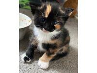 6 lovely kittens, amazing colours 🤍🤎🖤