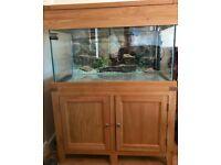 Aqua Oak 200L fish tank