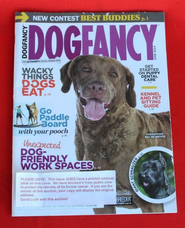 RARE ~ CHESAPEAKE BAY RETRIEVER Issue ~ DOG FANCY Magazine ~ June 2014