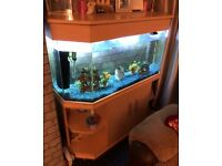 Large fish-tank
