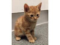 Kittens still available
