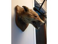 Mounted taxidermy (fox mask) - perfect for a man cave