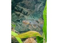 Rare/unique Tropical fish for sale