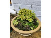 Herb, succulent and bulb patterned terracotta pot