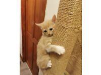 Gorgeous wee kitten