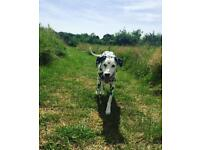 Experienced dog walker available in west Swindon!!