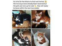 2 female kittens for sale