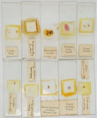 Vintage Microscope Slides Set of 10 (e)