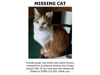 Missing Cat - Craiglockhart