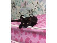 black kitten 4 month old