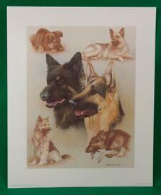 German Shepherd Dogs Print by Nigel Hemming