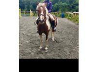 12.2 pony