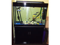 300 litre Aquarium with Lighting, Filter, Heater & African Cichlids