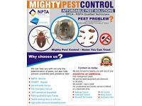Pest Control Services Mice Rats Bedbugs Ants Cockroaches Flies Flea Wasps Pigeons Extermination