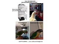 budgies and more with cage