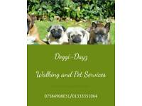 DOG WALKER - DOG WALKING SERVICE TAILORED TO YOUR DOG. ** Fully Insured**