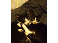 2 black and white cats - brother and sister