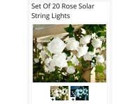 20 rose solar string lights