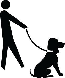 Skilled Dog Walker & Trainer