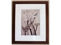 A pair of Framed Prints by Carol Lander