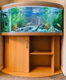 Fish tank and desk