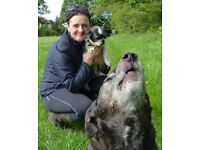 Hansons Hounds-Professional Dog Walking and Boarding Service in Leeds