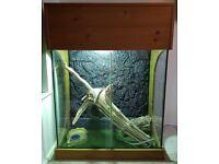 Large Custom Arboral Vivarium With Glass Side Walls - 4ft x 3ft x 1.5ft