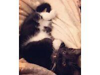 Kitten needing a loving home