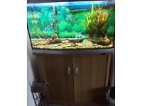 Complete Fish Tank with Cabinet