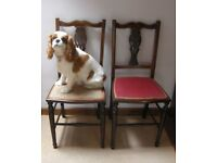 Set of six splat back dining chairs with two carvers ~ VINTAGE