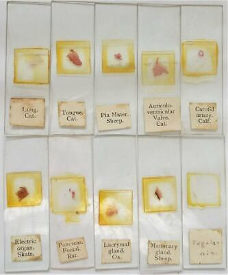 Vintage Microscope Slides Set of 10 (b)