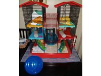 Russian Dwarf hamster with luxury cage and accessories