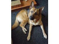 Dog walker,dog sitter,let out service,dog/cat feeding